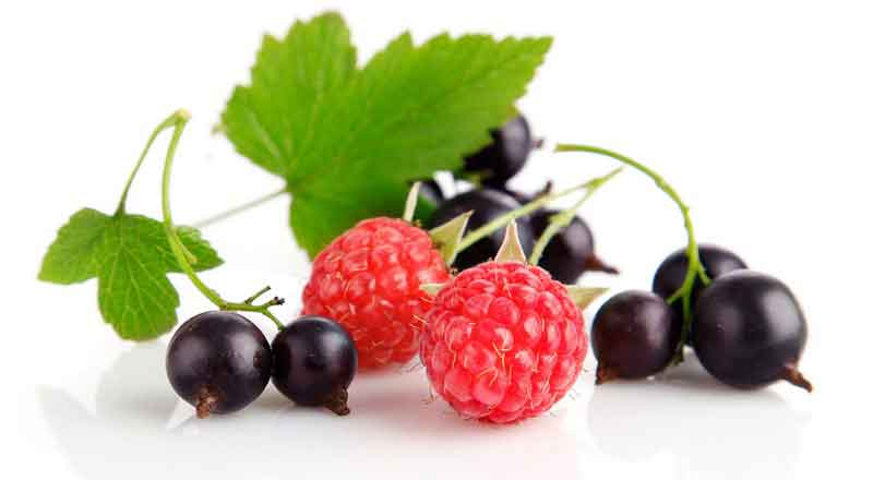 Ягоды разрешенные при сахарном диабете